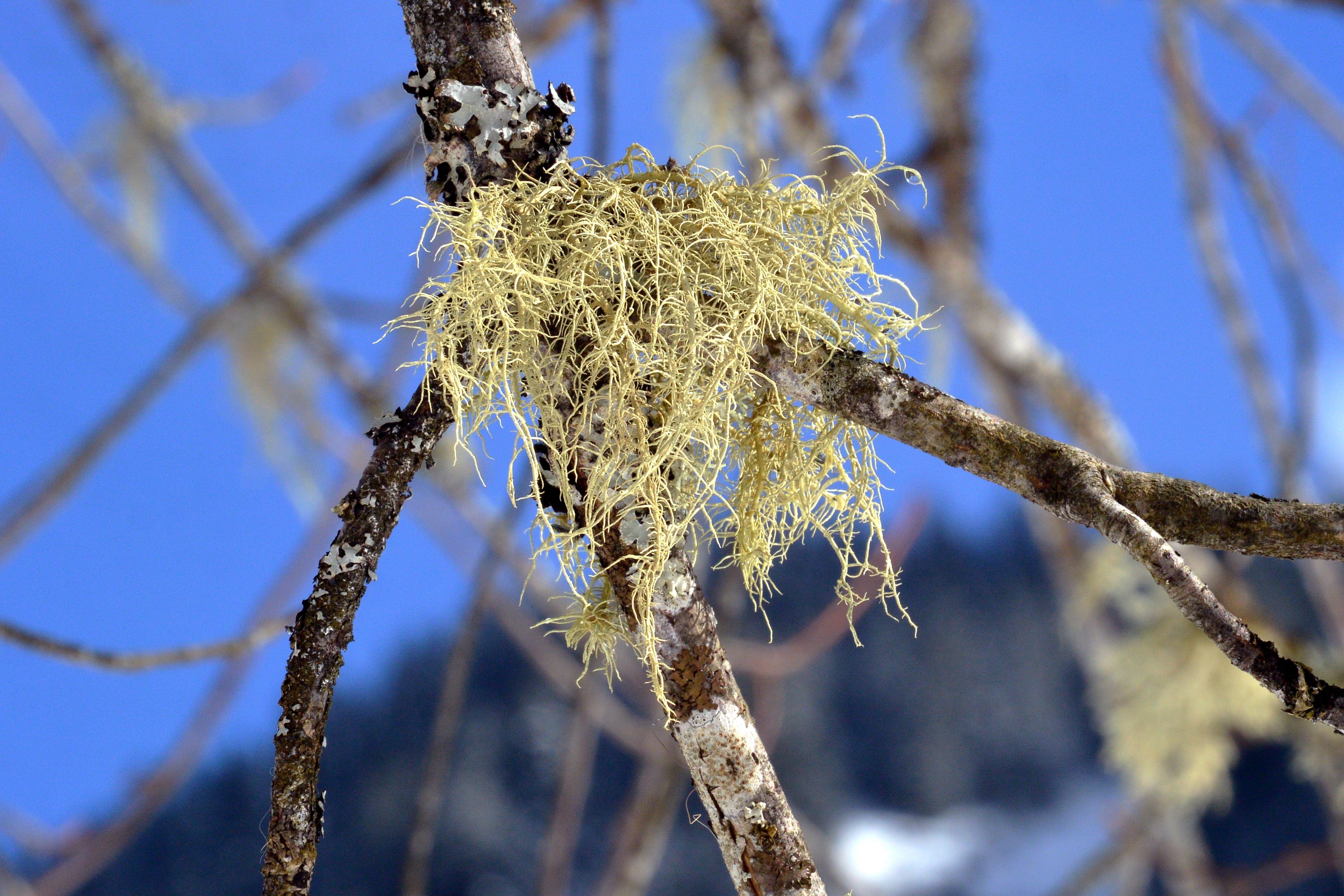 lichen-branch-bark-sky-tree-forest-wallpaper.jpg